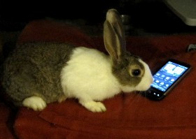 Rabbiting on